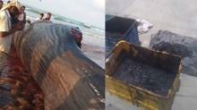 Pescadores descobrem fortuna de mais de R$ 7 milhões dentro de cadáver de Baleia