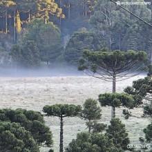 Massa de ar frio vai trazer neve ao Sul do Brasil nesta semana