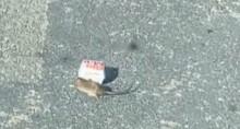 VÍDEO: Rato viraliza na internet ao carregar caixa do McDonald's pelas ruas