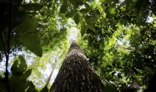 Brasil é líder mundial em proteção de florestas, afirma estudo da ONU