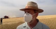 VÍDEO: agricultor do Brasil bate recorde mundial de produtividade de trigo e colhe 9.630 kg por hectare