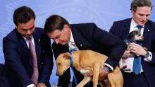 Está proibido matar cães e gatos saudáveis no Brasil