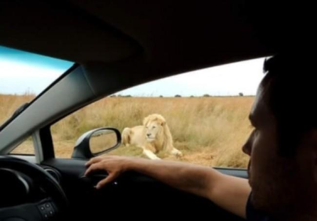 Na África do Sul, ficou frente a frente com Leões.