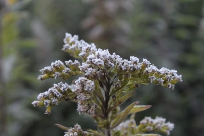 Geada deixou a vegetação coberta com uma fina camada de gelo (CRÉDITO: MARLENO MUNIZ FARIAS/ARQUIVO PESSOAL)