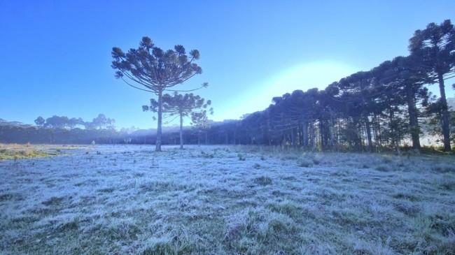 Geada no Vale do Caminhos da Neve em São Joaquim (CRÉDITO: MYCCHEL LEGNAGHI/SÃO JOAQUIM ONLINE)