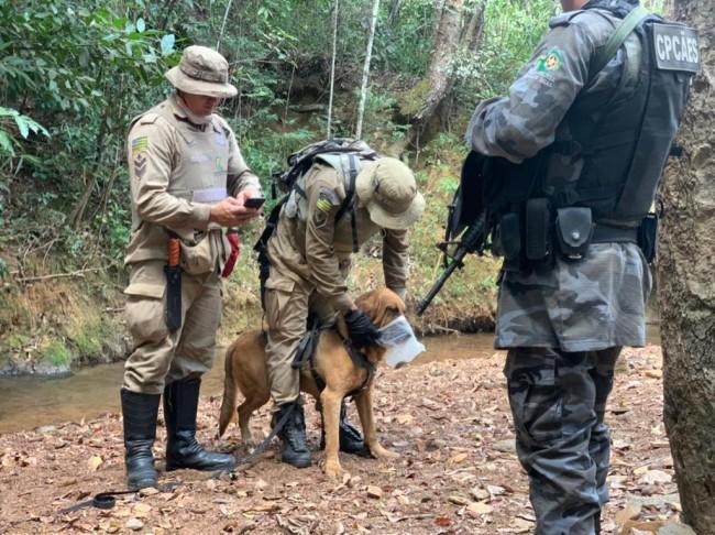 Hope, da raça Bloodhound (CRÉDITO: DIVULGAÇÃO/CORPO DE BOMBEIROS GOIÁS)