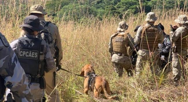 Força-tarefa conta com os melhores cães-farejadores do Brasil (CRÉDITO: DIVULGAÇÃO/CORPO DE BOMBEIROS GOIÁS)